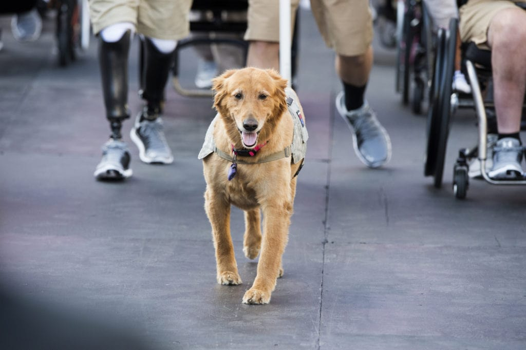 DOT releases new guidelines for Service Dogs on flights